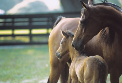 mareandfoal